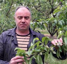 Antonis Liliopoulos - Kouloura, Imathia