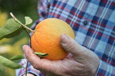 Ιστορίες από πρώτο χέρι: Πορτοκάλια